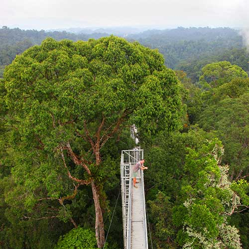 Temburong Highlights Freme Travel