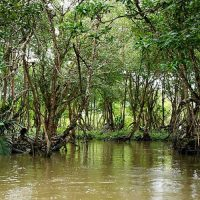 Mangrove river safari