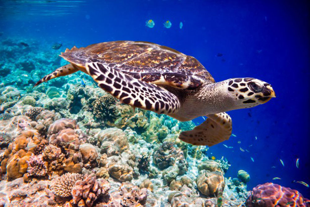 Dive In 11 Amazing Snorkelling And Diving Spots In Asia